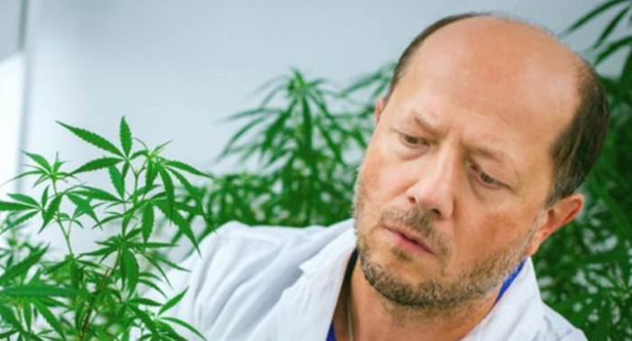 Inplanta Biyoteknoloji'nin kurucularından Igor Kovalchuk, Lethbridge Üniversitesi'nde kenevir araştırmaları yapıyor.
