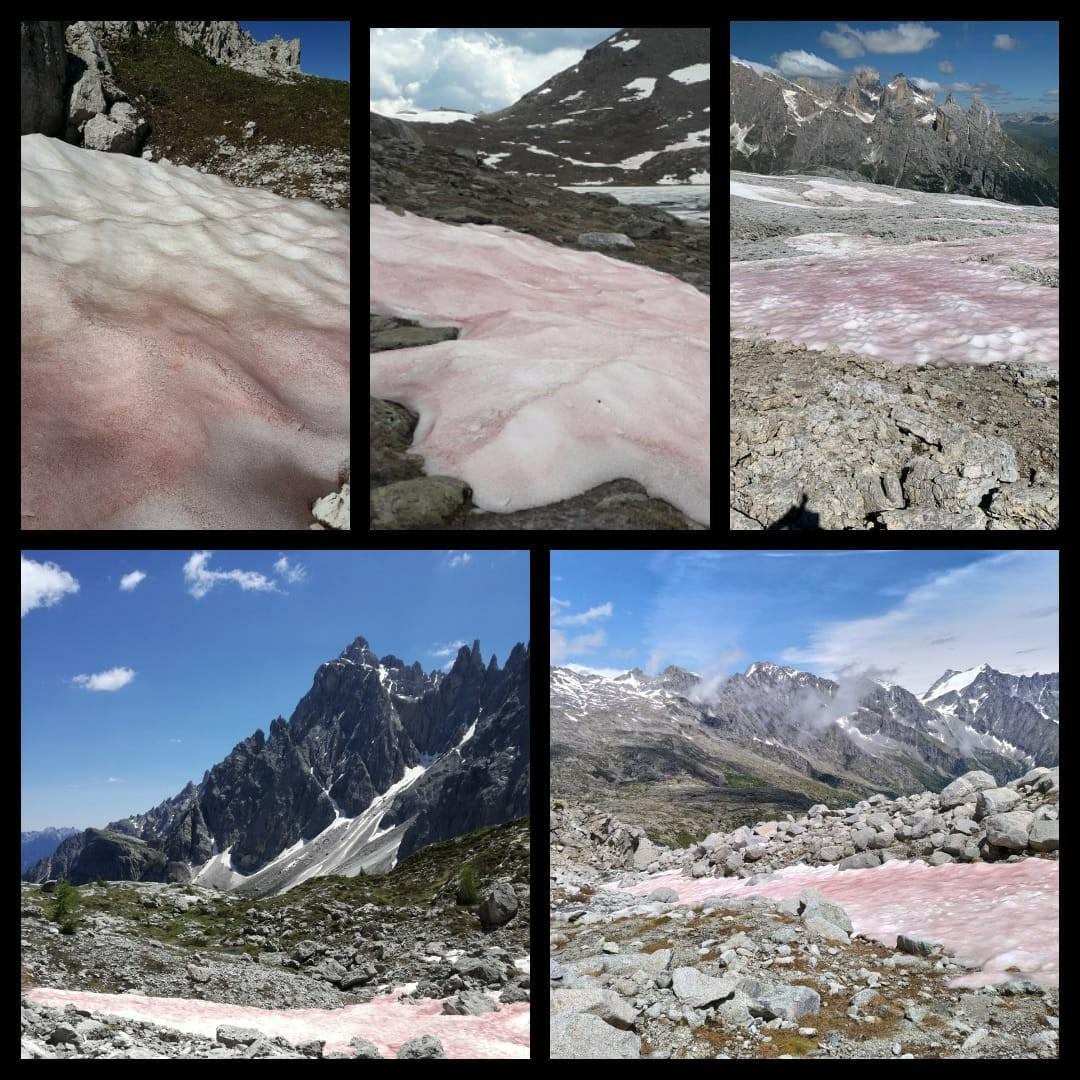 Yaz ayları yaklaşırken, Alp dağlarının yüksek kesimlerinde, 'kırmızı kar' görüldü. Bilim insanları, mikroalglerin çoğalmasının karın renk değiştirmesine neden olduğunu açıkladı. (Melike Yazır/Paris-İHA)